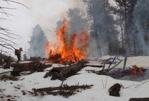 essay on forest fire regenerates the ecology