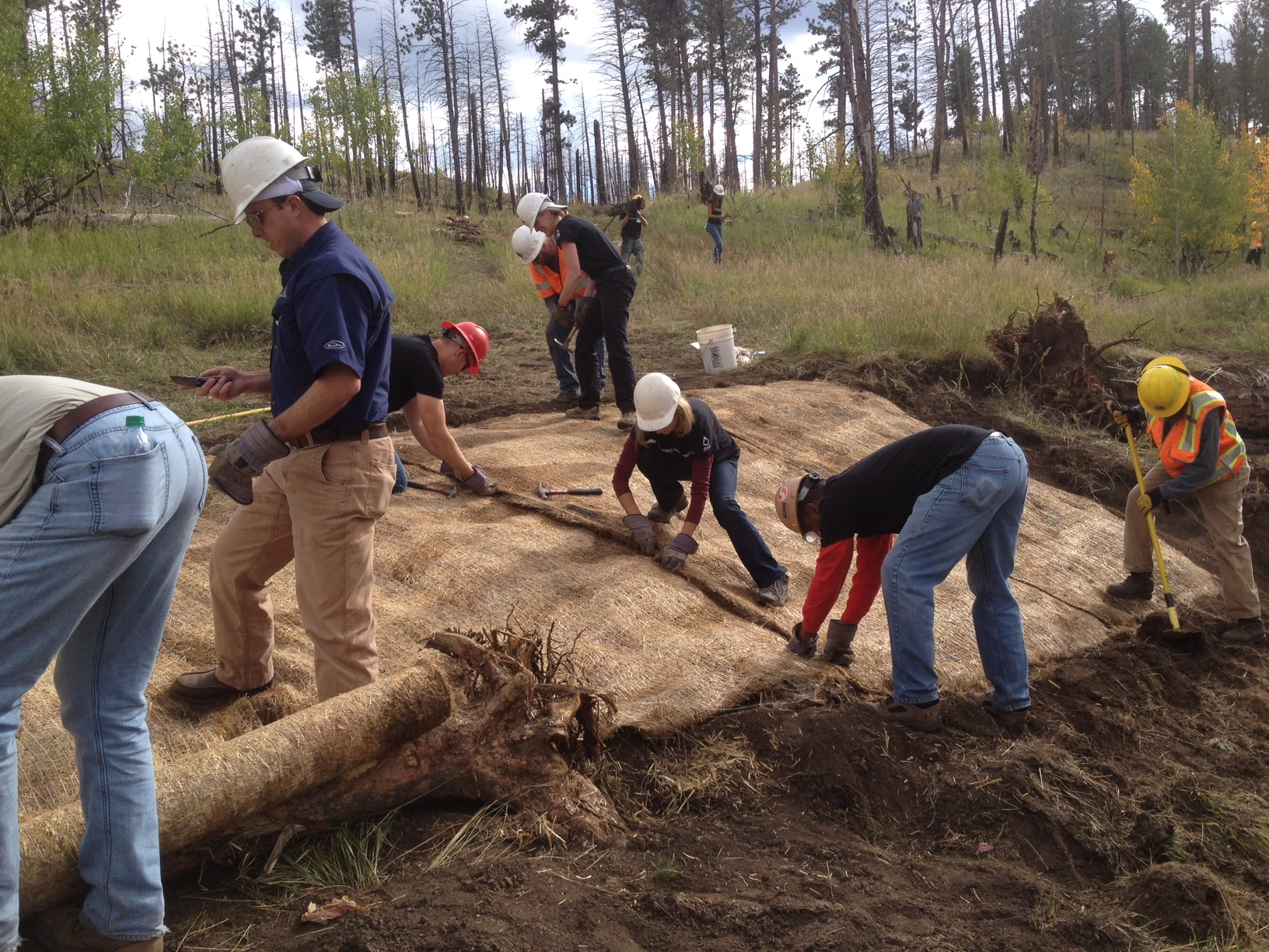 Wildfires have long-term costs.  CUSP volunteers continue with restoration efforts in the 2002 Hayman burn scar
